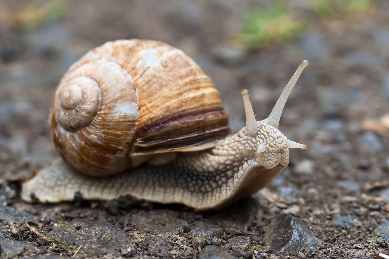 Вопрос теста - влаголюбивый моллюск