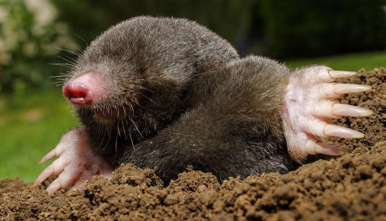 Вопрос теста - Почва как среда жизни. Роль растений и животных в почвообразовании