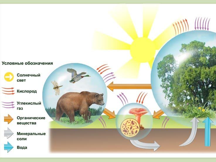 Вопрос теста - Роль животных, грибов и бактерий в сообществе.
