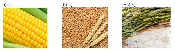вопрос теста «Хлеб человечества» Зарубежной Азии