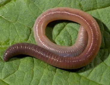 вопрос теста Кольчатый червь