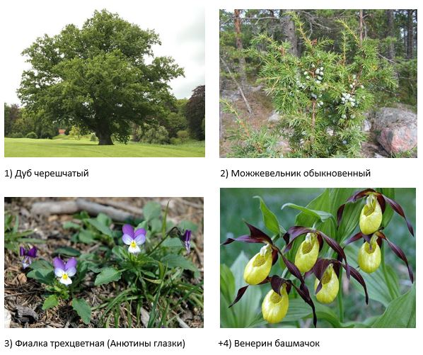 вопрос теста Какое растение занесено в Красную книгу РФ