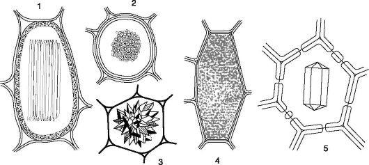 вопрос теста Кристаллы солей в клетке