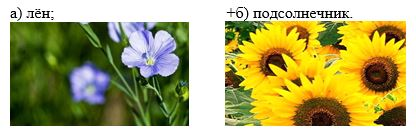 вопрос теста Выращивают на юге Центральной России