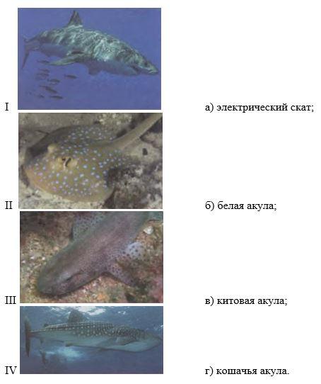 вопрос теста Соотнесите изображение и название рыбы
