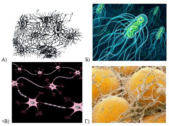 вопрос теста Структурная единица нервной ткани – нейрон