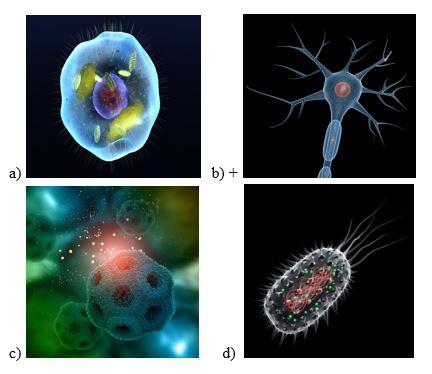вопрос теста На какой картинке изображена нервная клетка
