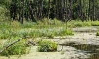 вопрос теста Низинные болота