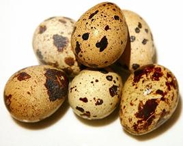 вопрос теста Перепелиные яйца