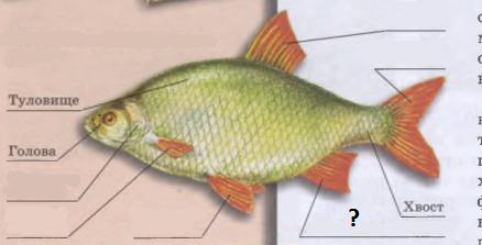 вопрос теста Внешнее строение рыбы