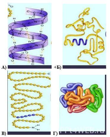 вопрос теста Третичная структура белка