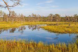 вопрос теста Верховые болота